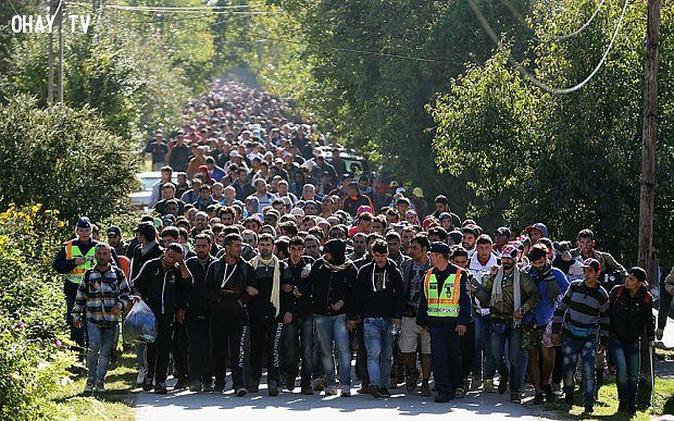 Hàng ngàn người tị nạn đi bộ từ biên giới Hungary sang Áo (Theo telegraph.co.uk)