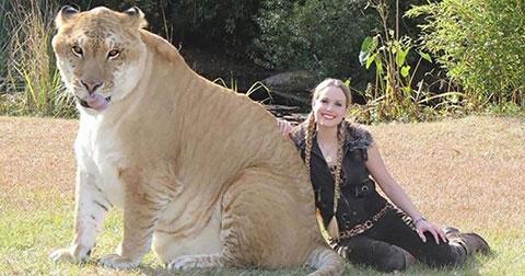 Những loài động vật kỳ lạ nhưng hoàn toàn có thật