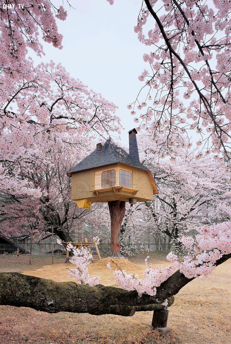 Nhà cây trà đạo Tetsu tại Nhật Bản