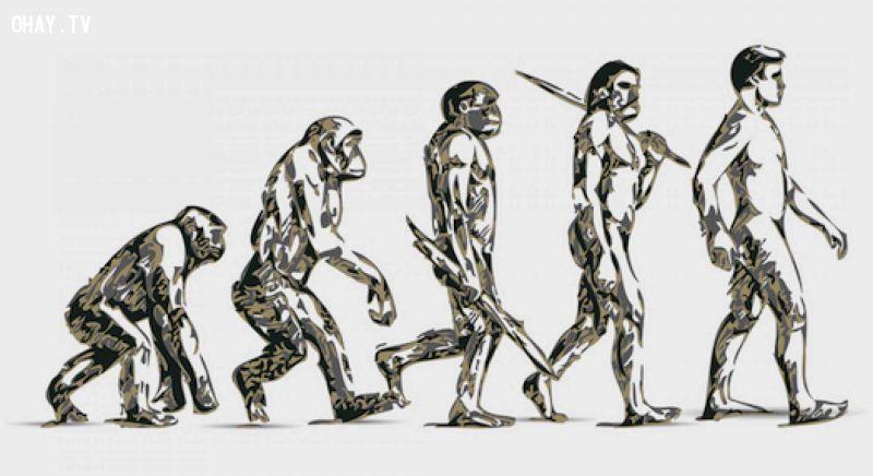 ảnh tiến hóa,con người,quá trình tiến hóa