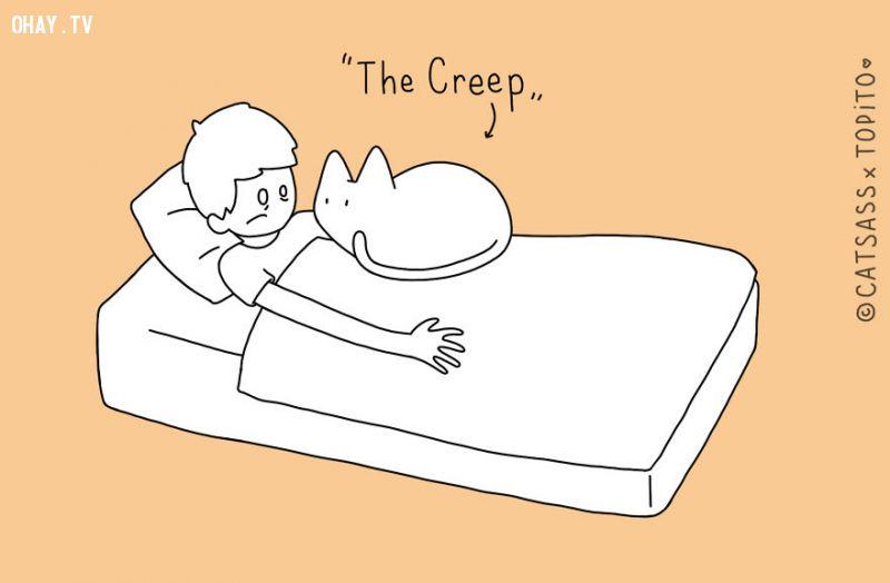 ảnh mèo cưng,nuôi mèo