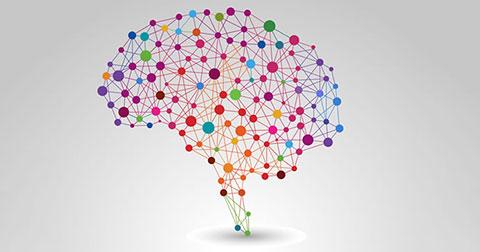 8 điều sai lầm về não bộ mà mọi người thường nghĩ