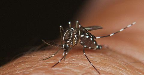 Muỗi đứng đầu danh sách 10 loài động vật nguy hiểm nhất thế giới