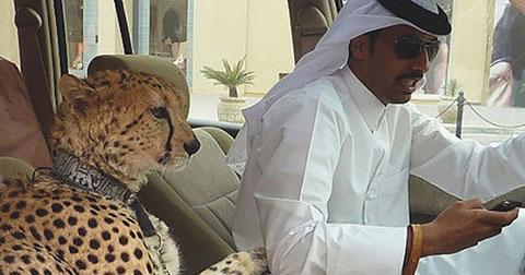 27 hình ảnh bạn chỉ có thể thấy ở Dubai