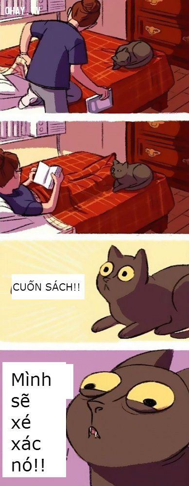 Khi bạn sống cùng mèo