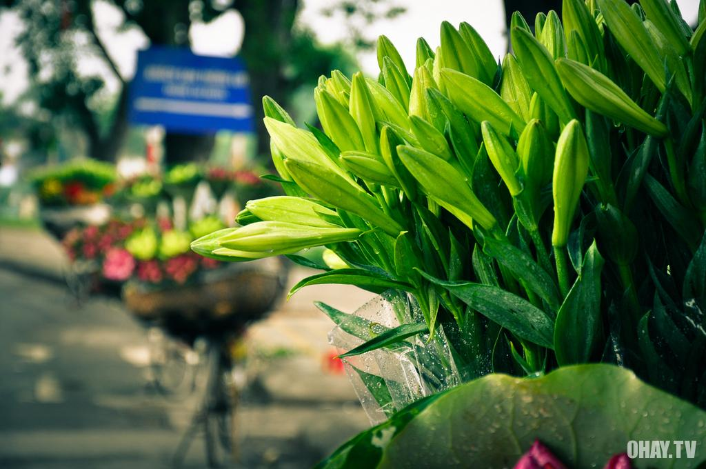 hoa hà nội