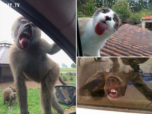 ảnh cửa kính,động vật,vật nuôi,chó mèo