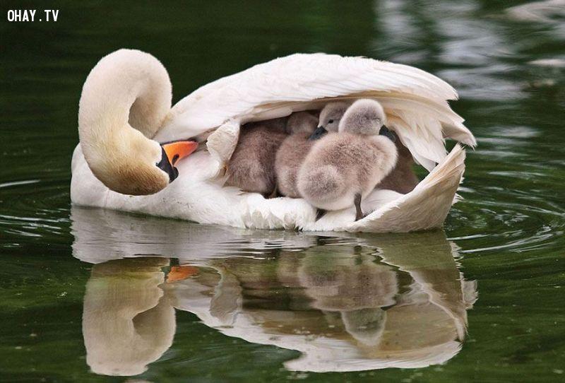 ảnh động vật,thế giới động vật,tình mẫu tử,cha mẹ và con cái,dễ thương