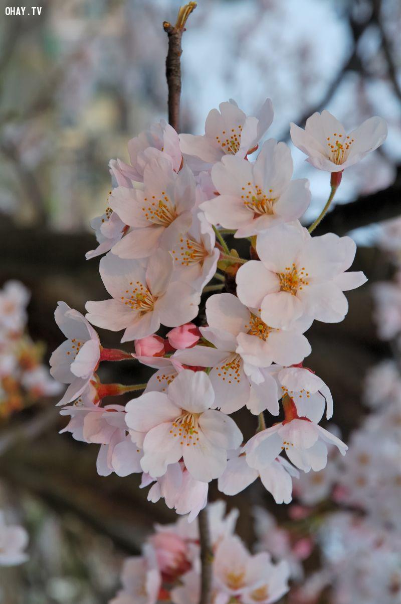 ảnh các loài hoa
