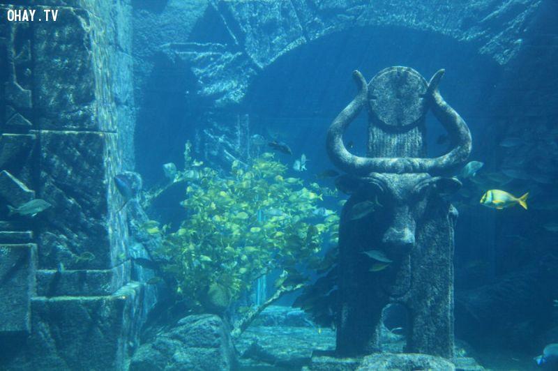 ảnh khám phá lòng đại dương,bí ẩn trong lòng đại dương