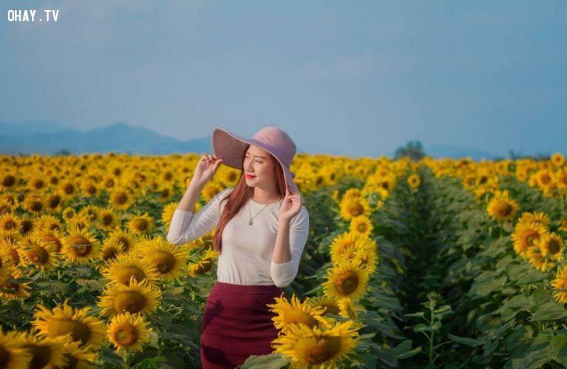 Cánh đồng hoa hướng dương tại Nghĩa Đàn-Nghệ An thu hút nhiều bạn trẻ đến chụp ảnh.