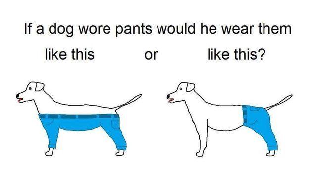 ảnh chó mặc quần,vấn đề gây tranh cãi