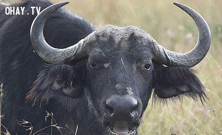 ảnh động vật nguy hiểm,sát thủ,những loài vật nguy hiểm nhất