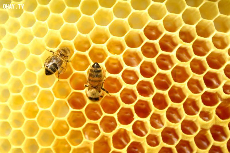 ảnh phân biệt mật ong,mật ong,phân biệt hàng giả