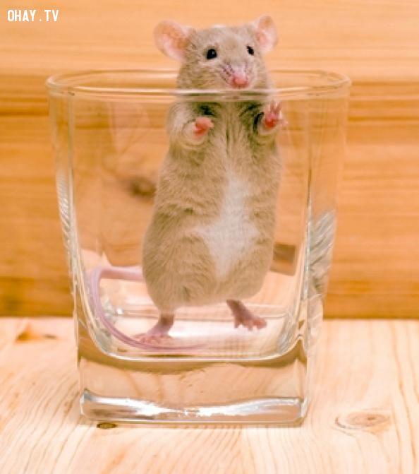 ảnh con chuột,Mountain Dew,an toàn thực phẩm,xử lý khủng hoảng,pepsi