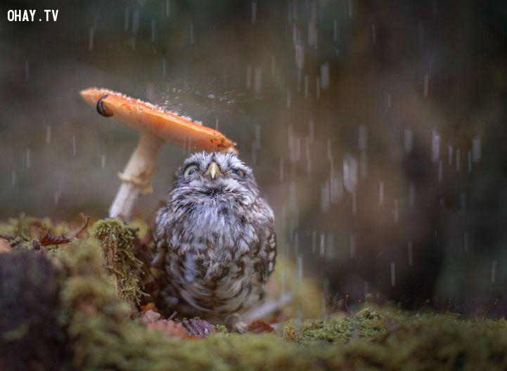 Chú chim đứng trú mưa dưới cây nấm