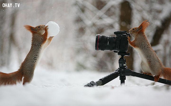 Sóc đùa nghịch với những chiếc máy quay