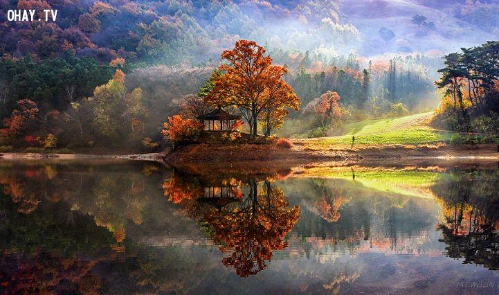 Sống ẩn dật yên tĩnh nơi rừng sâu