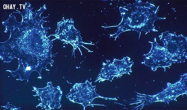 ảnh ung thư,bệnh ung thư,sự thật thú vị về ung thư,có thể bạn chưa biết,những điều thú vị trong cuộc sống