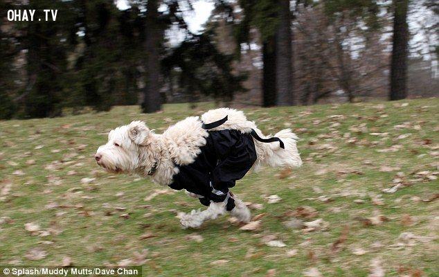 ảnh quần cho chó,chó mặc quần
