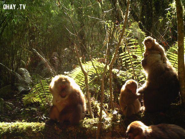 ảnh các loài động vật mới phát hiện,thế giới động vật