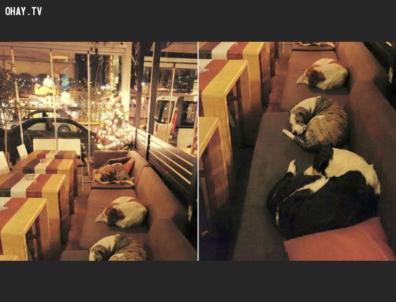 ảnh quán cafe,chó hoang,người tốt