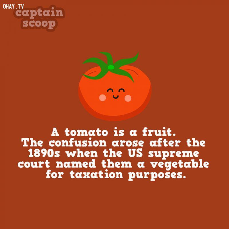 Cà chua là rau hay quả