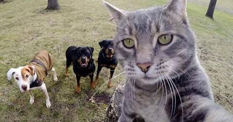 Bộ hình ngộ nghĩnh về chú mèo biết chụp Selfie và những người bạn