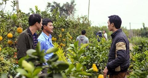 Làng cây cảnh Văn Giang bước vào mùa Tết