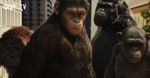 Loài vật nào sẽ thống trị trái đất nếu như loài người bị tuyệt chủng?