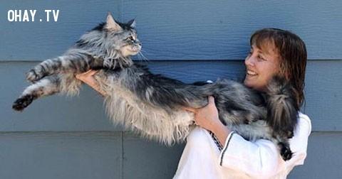 Những sự thật thú vị về mèo có thể bạn chưa biết