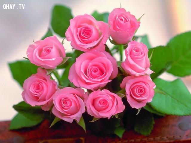 Hoa hồng:,quà Valentine,Valentine,tặng quà valentine,valentine tặng quà gì,tình yêu