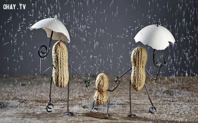 Gia đình đậu phộng,đậu phộng,củ lạc,sáng tạo,Nailia Schwarz