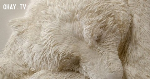 Một chú gấu đang ngủ sao? Hãy nhìn kỹ lần nữa, bạn sẽ không tin vào mắt mình!