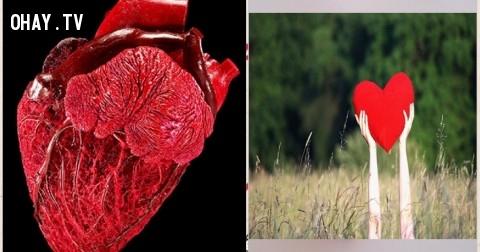 Biểu tượng trái tim có nguồn gốc từ đâu?