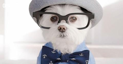 Gặp gỡ Toby - chú chó sành điệu nhất quả đất