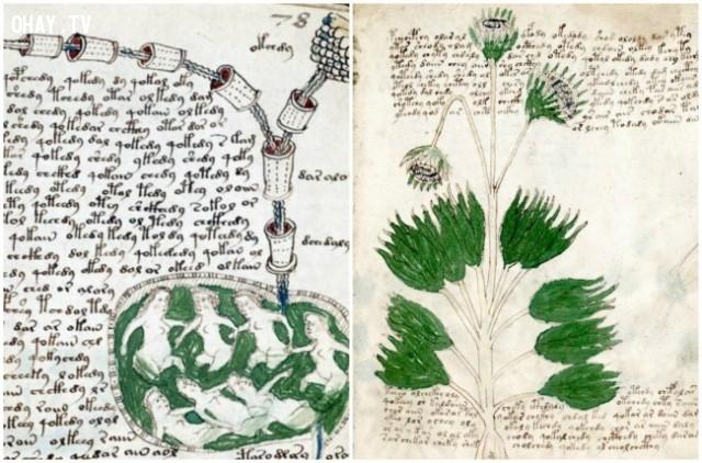 Bản thảo Voynich,tạo vật lịch sử,bí ẩn,khám phá