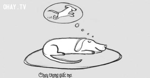 Cuộc sống của một chú cún như thế nào?