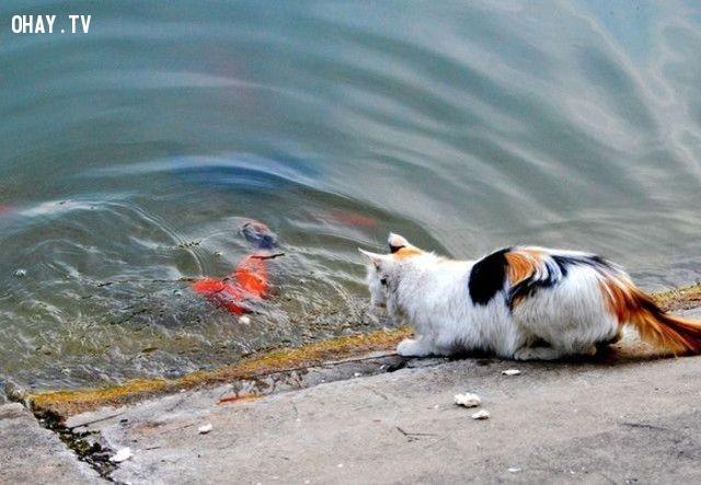 ,mèo cưng,liều ăn nhiều,mèo ăn cá,thú cưng,dễ thương