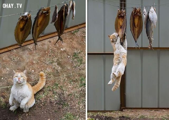 Người ta nói chó treo cao mèo đậy kỹ chẳng có sai :)),mèo cưng,liều ăn nhiều,mèo ăn cá,thú cưng,dễ thương