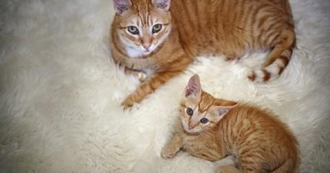 40 bức ảnh 'siêu dễ thương' về mèo mẹ và phiên bản nhí giống nhau như đúc