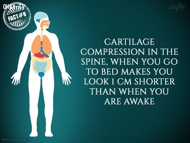6. Vì sự nén xương sụn trong cột sống nên khi bạn ngủ sẽ trông thấp hơn 1 cm so với khi bạn thức.,sự thật thú vị,sự thật đáng kinh ngạc,cơ thể,cơ thể con người,những điều thú vị trong cuộc sống