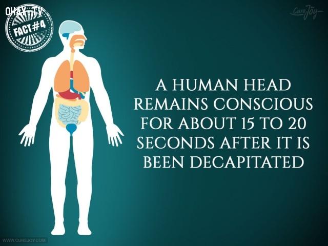 4. Đầu người vẫn có ý thức khoảng 15 - 20 giây sau khi bị chặt đứt.,sự thật thú vị,sự thật đáng kinh ngạc,cơ thể,cơ thể con người,những điều thú vị trong cuộc sống
