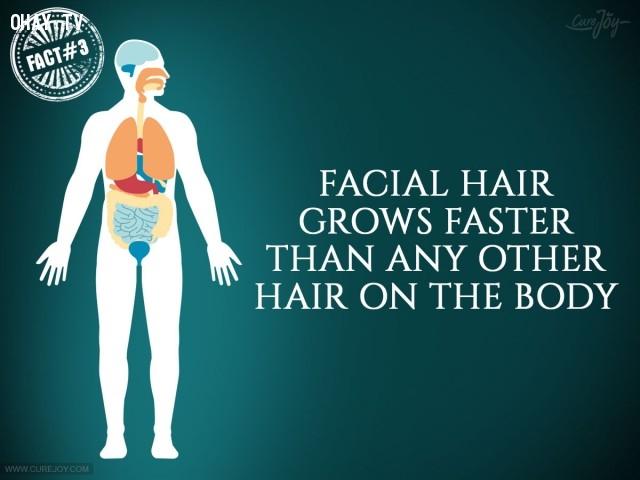 3. Lông mặt mọc nhanh hơn so với bất kỳ vị trí nào khác trên cơ thể.,sự thật thú vị,sự thật đáng kinh ngạc,cơ thể,cơ thể con người,những điều thú vị trong cuộc sống