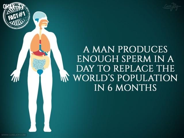 1. Một người đàn ông trong một ngày có thể sản xuất đủ số lượng tinh trùng để thay thế dân số thế giới trong 6 tháng.,sự thật thú vị,sự thật đáng kinh ngạc,cơ thể,cơ thể con người,những điều thú vị trong cuộc sống