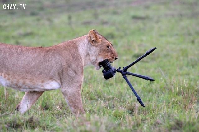Thôi xong cái máy ảnh,đáng yêu,động vật,máy ảnh