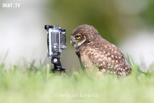 Bạn thấy chưa? Đúng nhiếp ảnh gia chứ?,đáng yêu,động vật,máy ảnh