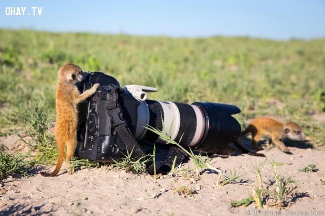 Phó nháy tận tâm nhưng mẫu có vẻ không hứng thú,đáng yêu,động vật,máy ảnh