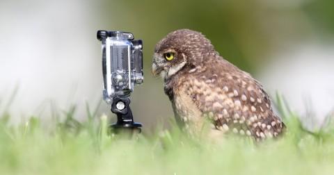 19 hình ảnh siêu dễ thương ghi lại khoảnh khắc động vật bên ống kính máy ảnh