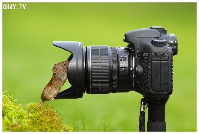 Làm một phát macro nào,đáng yêu,động vật,máy ảnh